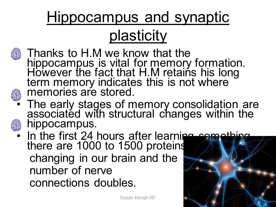 Hippocampus and synaptic plasticity Thanks to H.M we know that the hippocampus is vital for memory formation. However the fact that H.M retains his lo