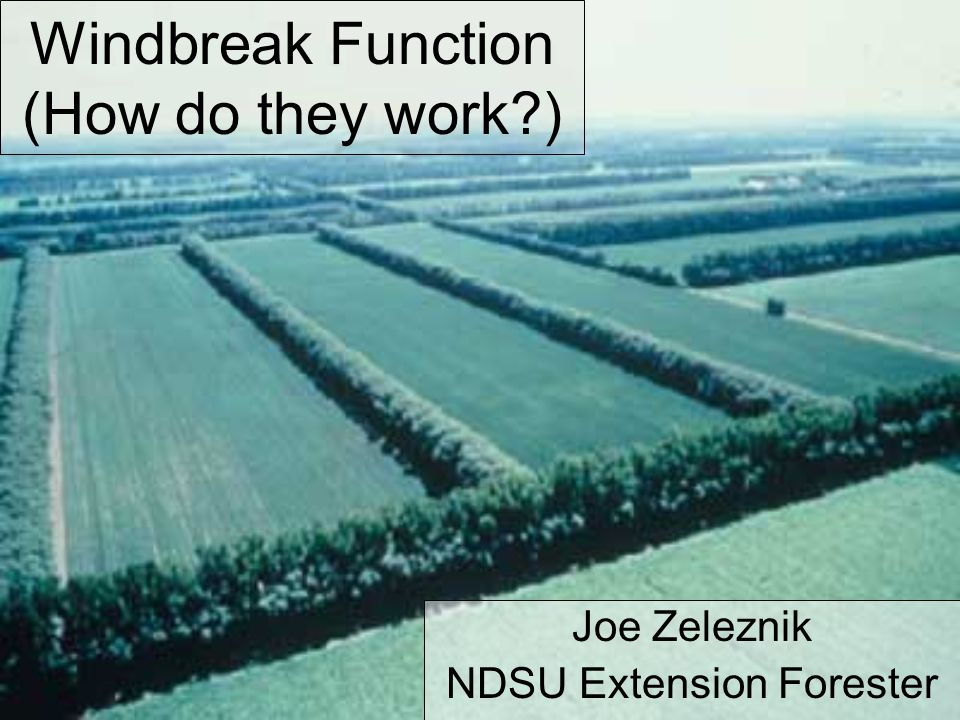 Windbreak Function - Basics They slow down the wind They re-direct the wind Which modifies the microclimate and environment in protected areas