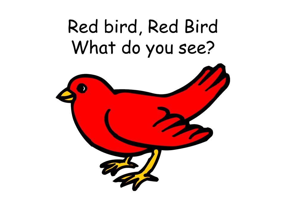 Red bird, Red Bird What do you see?