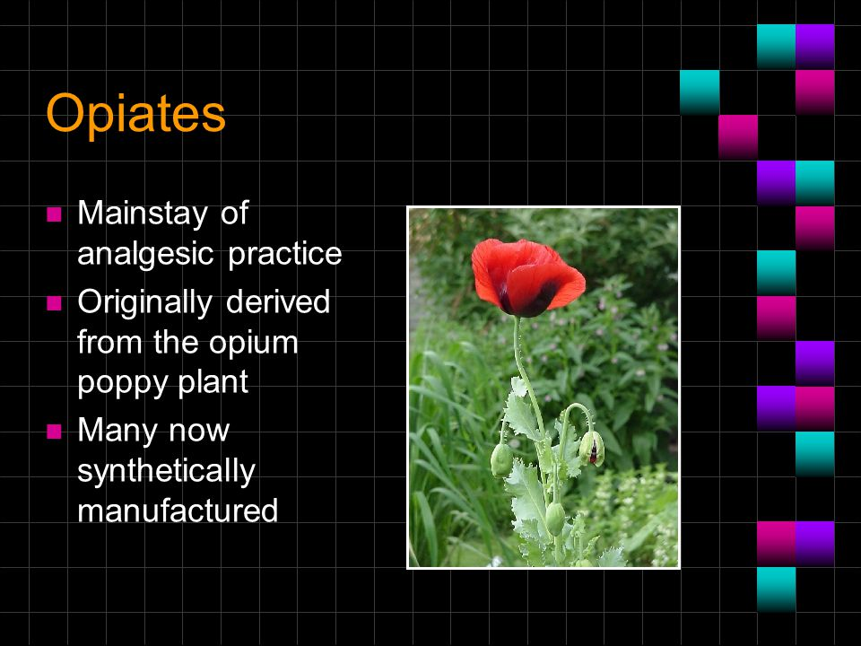 Opiates n Mainstay of analgesic practice n Originally derived from the opium poppy plant n Many now synthetically manufactured