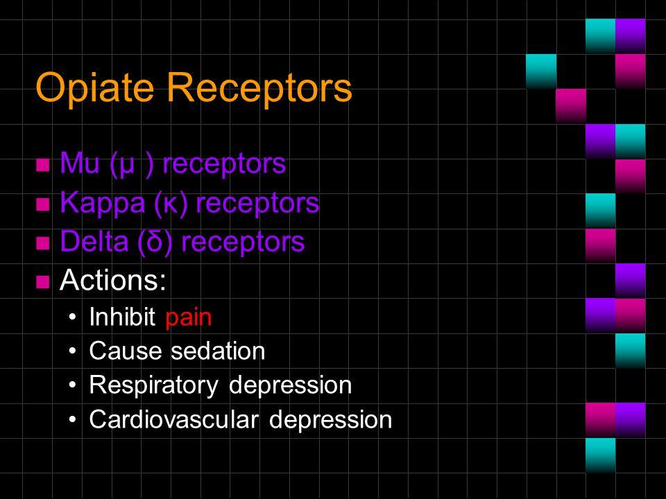 Opiate Receptors n Μu (μ ) receptors n Kappa (κ) receptors n Delta (δ) receptors n Actions: Inhibit pain Cause sedation Respiratory depression Cardiovascular depression