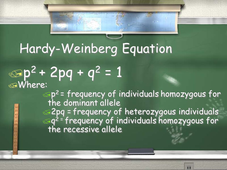 Hardy-Weinberg Equation / p 2 + 2pq + q 2 = 1 / Where: / p 2 = frequency of individuals homozygous for the dominant allele / 2pq = frequency of hetero