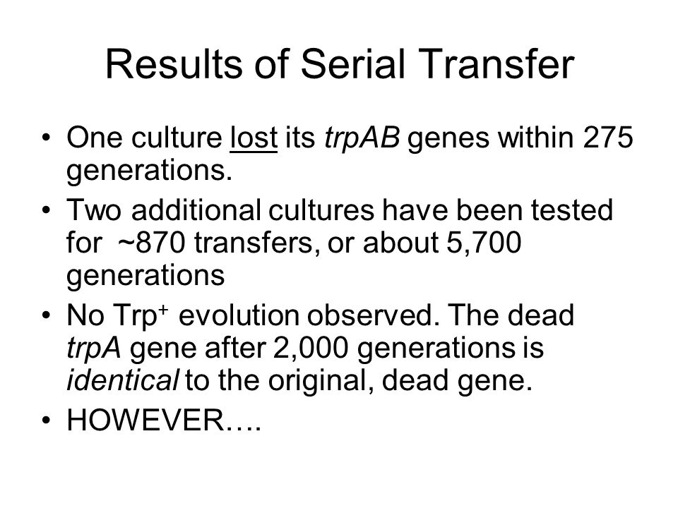 Results of Serial Transfer One culture lost its trpAB genes within 275 generations.