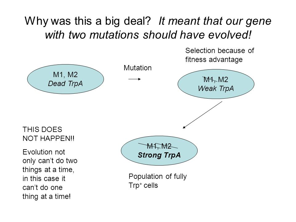 Why was this a big deal. It meant that our gene with two mutations should have evolved.