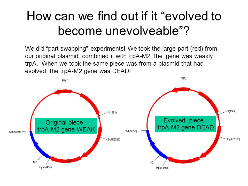How can we find out if it evolved to become unevolveable .