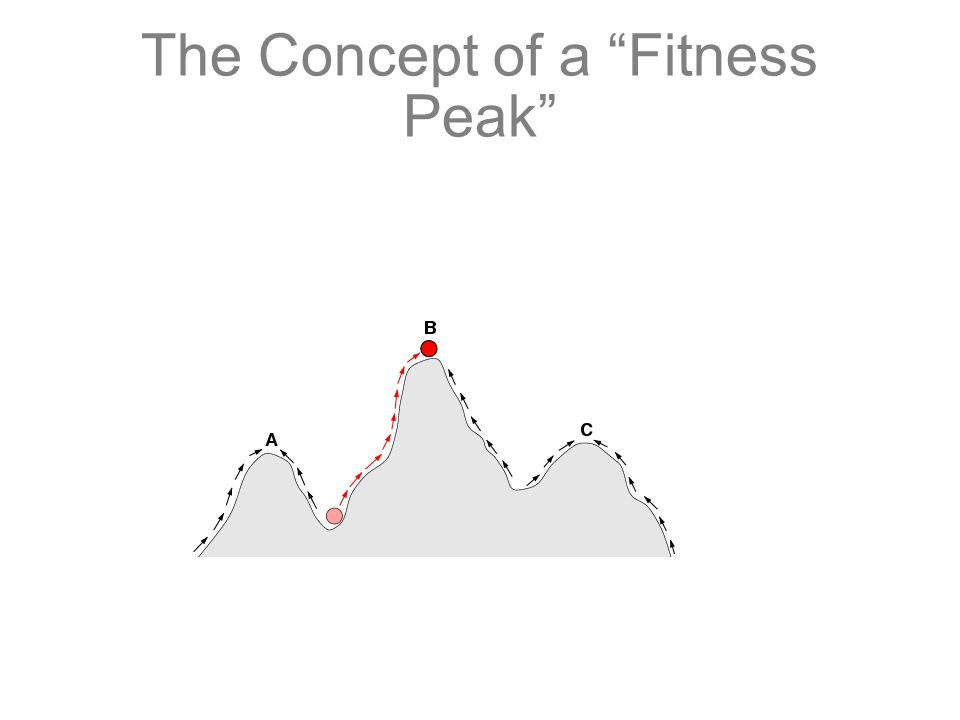 The Concept of a Fitness Peak