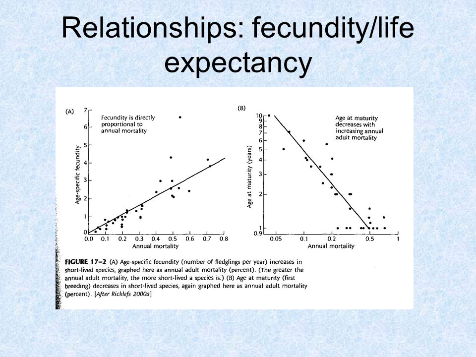 Relationships: fecundity/life expectancy