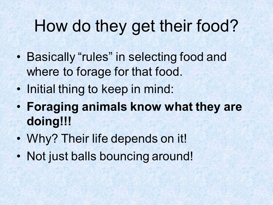 How do they get their food. Basically rules in selecting food and where to forage for that food.