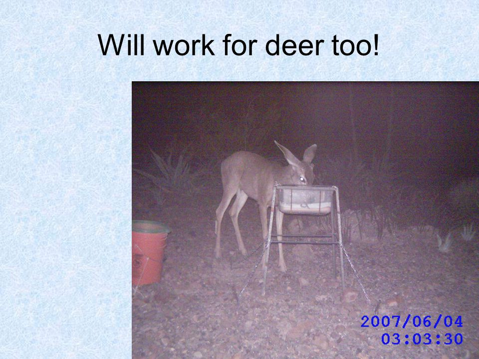 Will work for deer too!