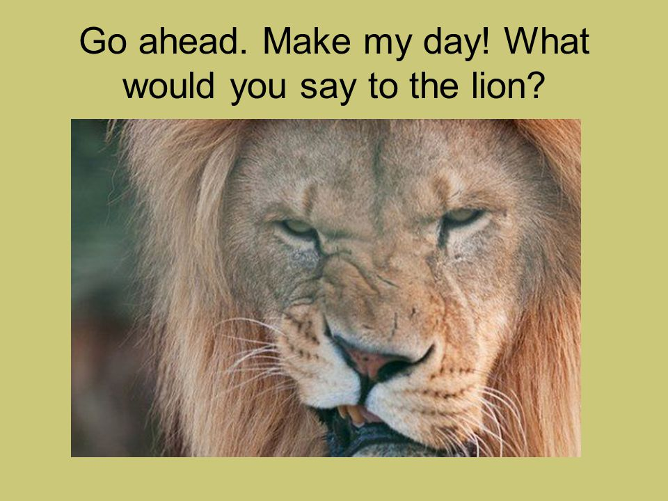 Go ahead. Make my day! What would you say to the lion