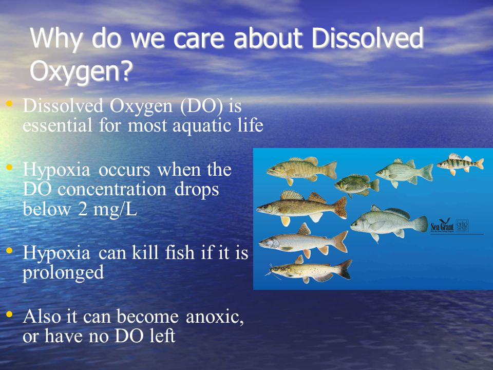 Why do we care about Dissolved Oxygen.