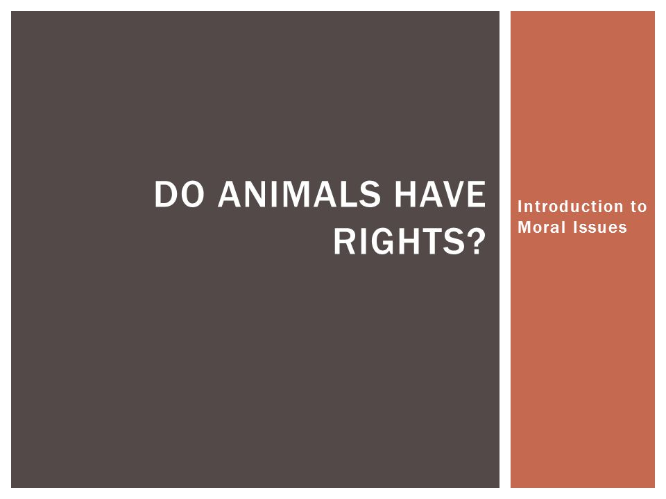 Introduction to Moral Issues DO ANIMALS HAVE RIGHTS?
