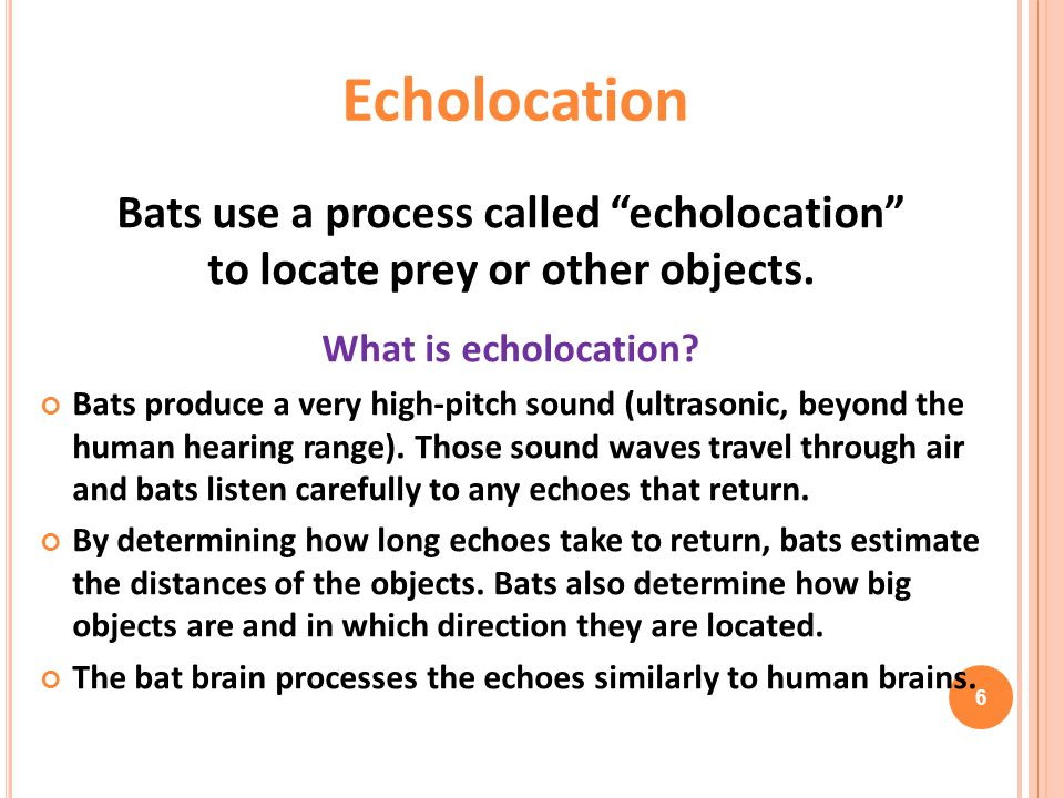 """Bats use a process called """"echolocation"""" to locate prey or other objects. What is echolocation? Bats produce a very high-pitch sound (ultrasonic, beyo"""