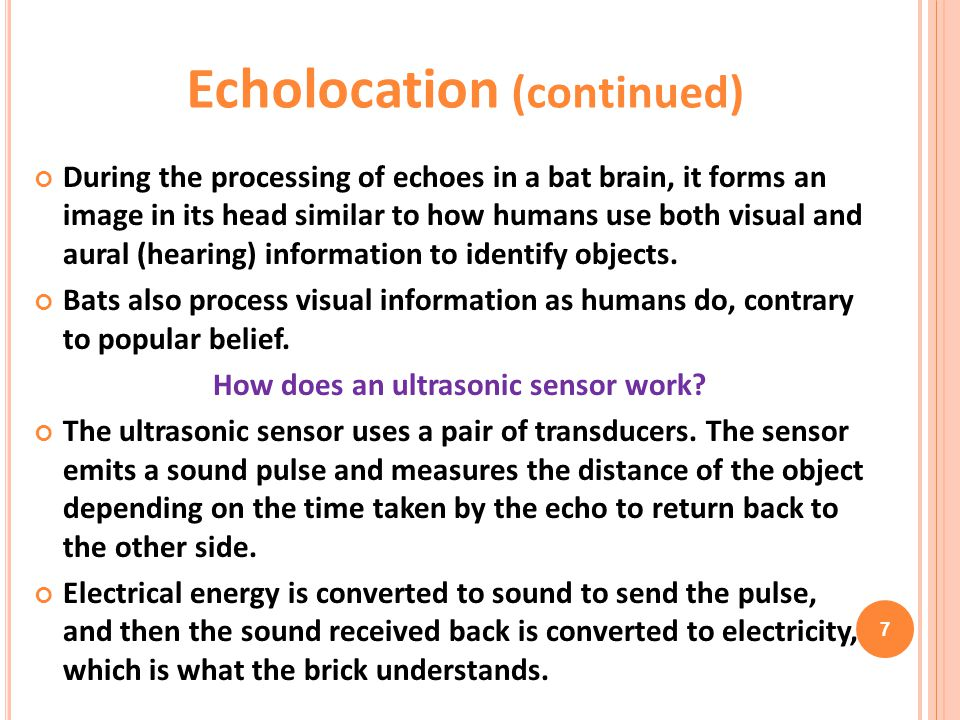 During the processing of echoes in a bat brain, it forms an image in its head similar to how humans use both visual and aural (hearing) information to