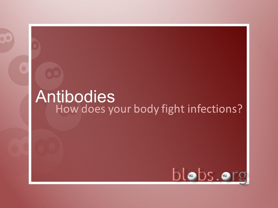 Antibodies How does your body fight infections?