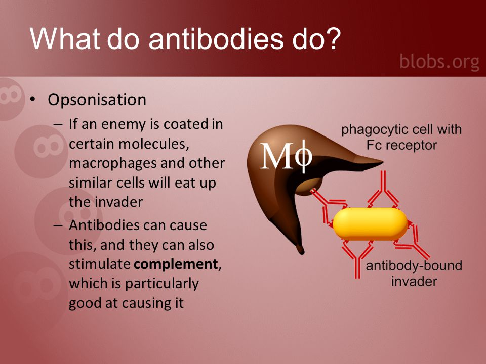 What do antibodies do.