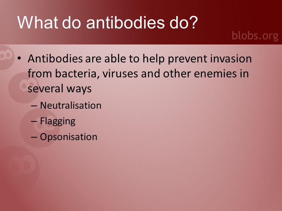 What do antibodies do.