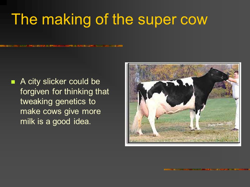 The making of the super cow A city slicker could be forgiven for thinking that tweaking genetics to make cows give more milk is a good idea.