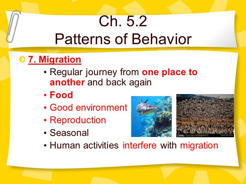 Ch. 5.2 Patterns of Behavior 7.