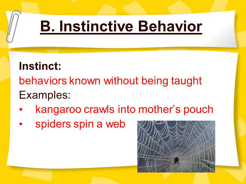 B. Instinctive Behavior Instinct: behaviors known without being taught Examples: kangaroo crawls into mother's pouch spiders spin a web
