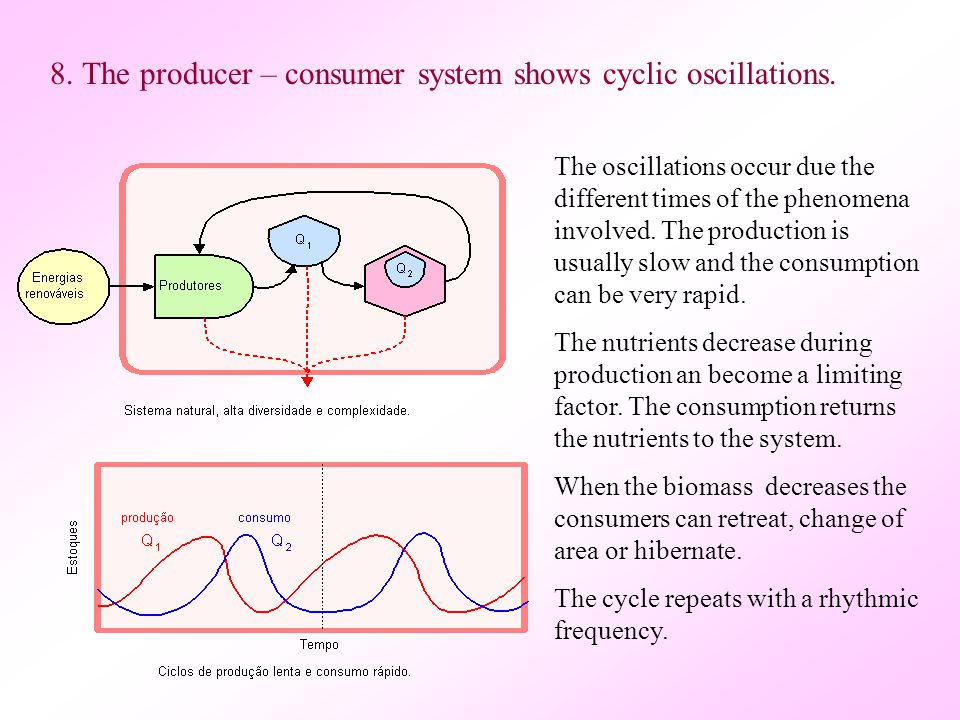 8.The producer – consumer system shows cyclic oscillations.