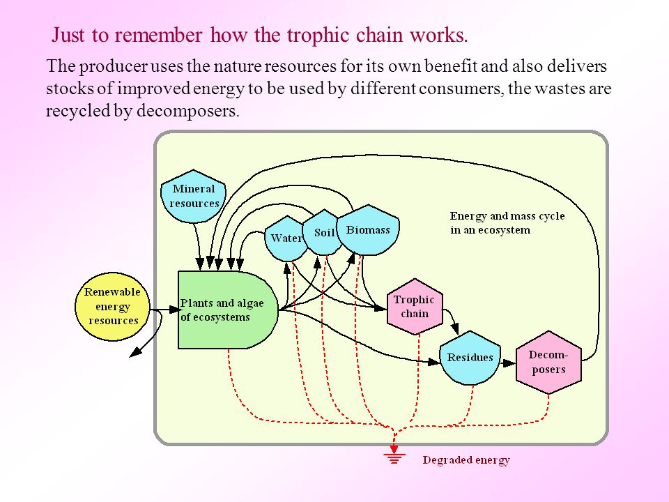 Just to remember how the trophic chain works.