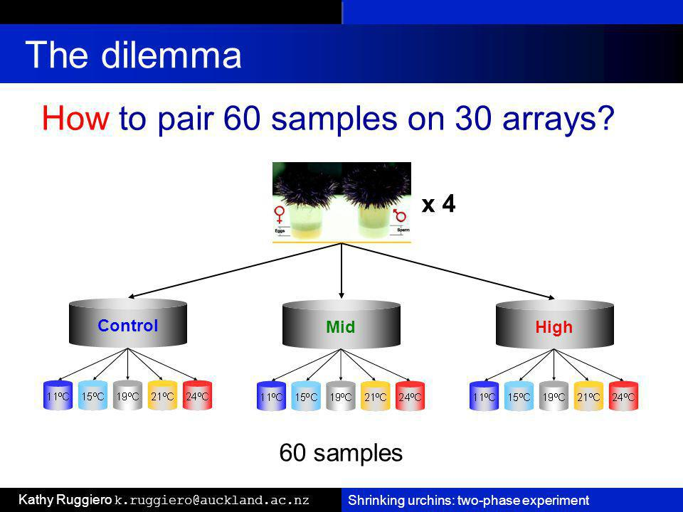 Shrinking urchins: two-phase experiment Kathy Ruggiero k.ruggiero@auckland.ac.nz The dilemma Control MidHigh How to pair 60 samples on 30 arrays.