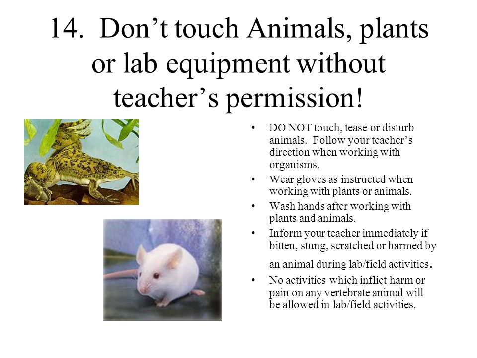 14.Don't touch Animals, plants or lab equipment without teacher's permission.