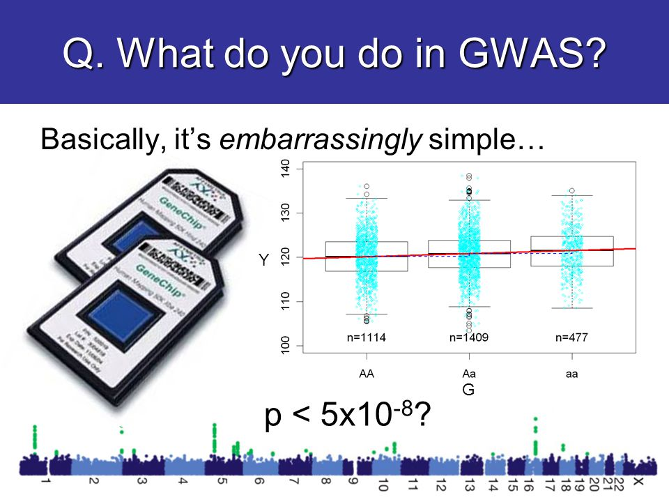Q. What do you do in GWAS p < 5x10 -8 Y G Basically, it's embarrassingly simple…