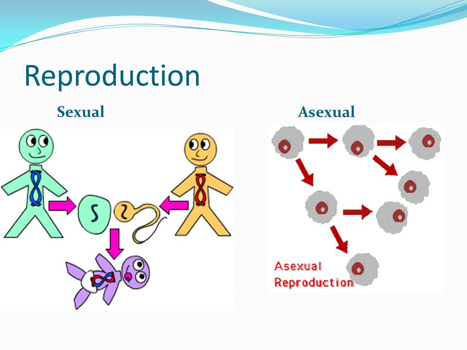 Reproduction Sexual Asexual