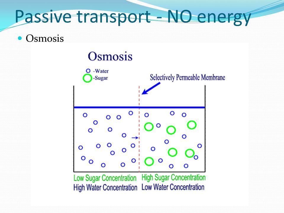 Passive transport- NO energy Osmosis