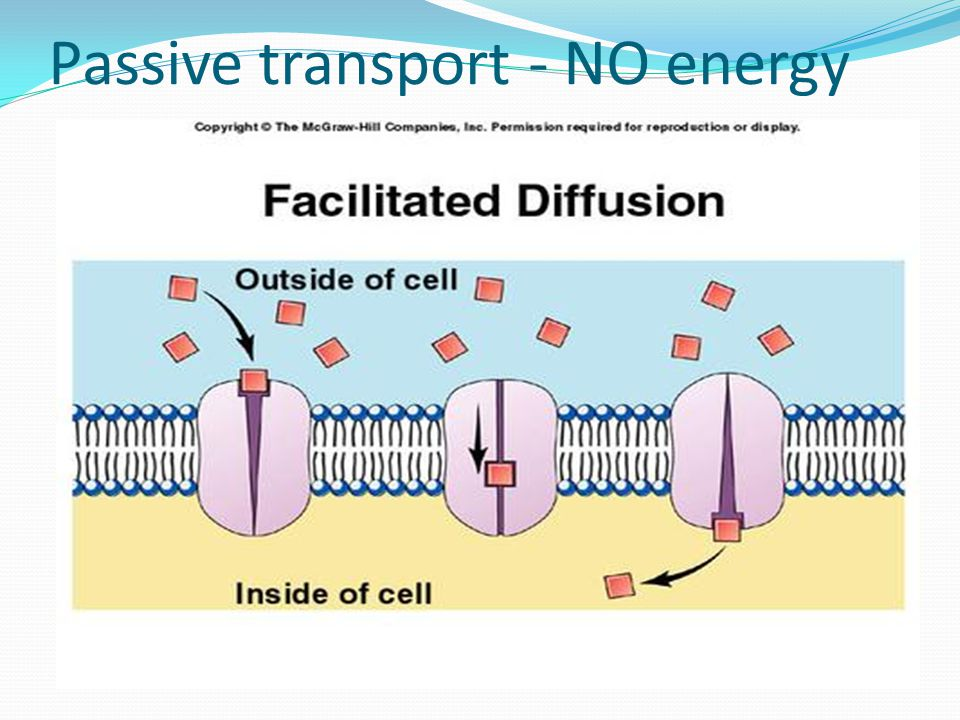Passive transport- NO energy Facilitated Diffusion