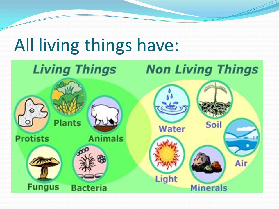 All living things have:
