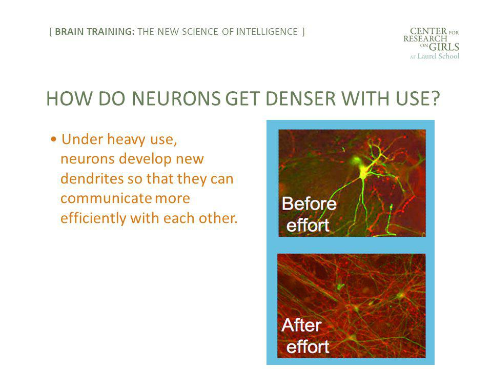 Under heavy use, neurons develop new dendrites so that they can communicate more efficiently with each other. HOW DO NEURONS GET DENSER WITH USE? [ BR