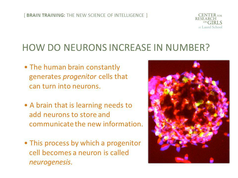 The human brain constantly generates progenitor cells that can turn into neurons.