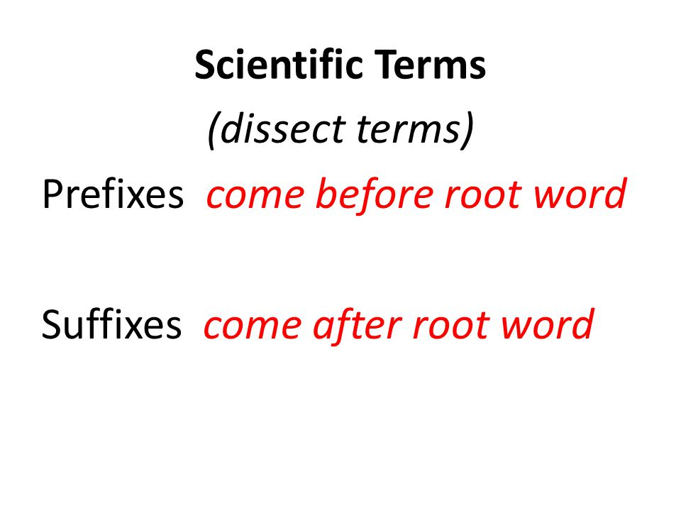 Scientific Terms (dissect terms) Prefixes come before root word Suffixes come after root word Ex.