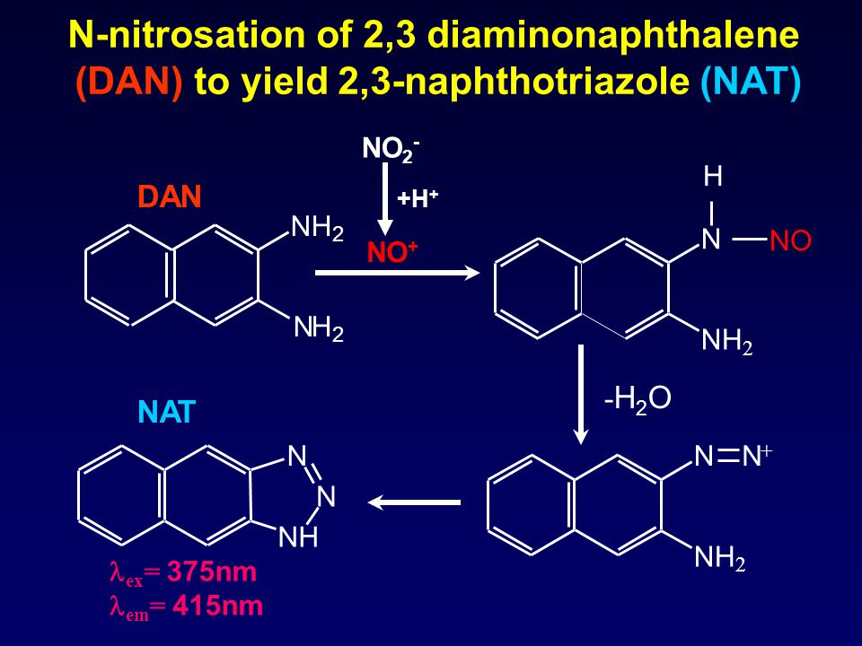 N-nitrosation of 2,3 diaminonaphthalene (DAN) to yield 2,3-naphthotriazole (NAT) NH 2 NH 2 NH N N H N NH 2 NO N NH 2 N + -H2O-H2O DAN NAT NO + ex = 375nm em = 415nm NO 2 - +H +