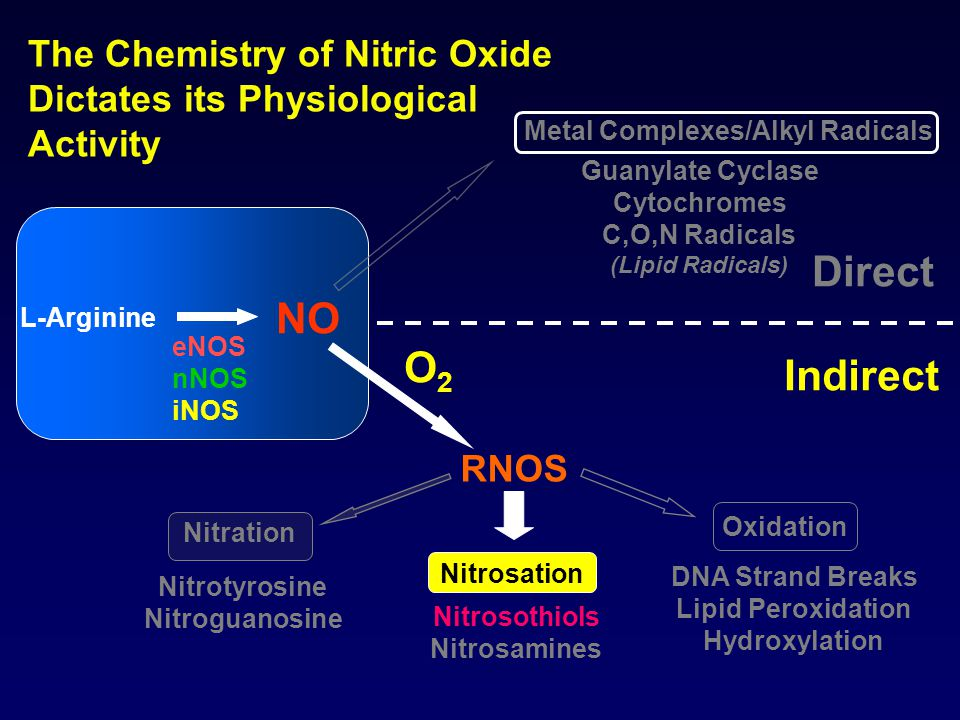 The Chemistry of Nitric Oxide Dictates its Physiological Activity Oxidation RNOS Guanylate Cyclase Cytochromes C,O,N Radicals (Lipid Radicals) O2O2 Direct Indirect L-Arginine eNOS nNOS iNOS NO Nitrosation DNA Strand Breaks Lipid Peroxidation Hydroxylation Nitrosothiols Nitrosamines Nitrotyrosine Nitroguanosine Nitration Metal Complexes/Alkyl Radicals