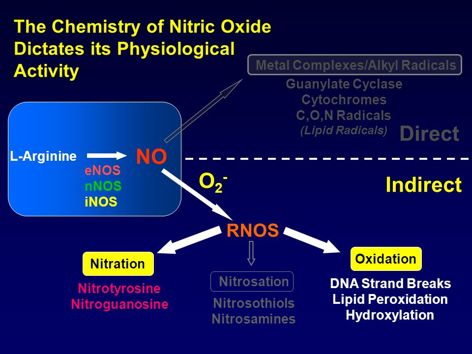 The Chemistry of Nitric Oxide Dictates its Physiological Activity Oxidation RNOS Guanylate Cyclase Cytochromes C,O,N Radicals (Lipid Radicals) O2- O2- Direct Indirect L-Arginine eNOS nNOS iNOS NO Nitrosation DNA Strand Breaks Lipid Peroxidation Hydroxylation Nitrosothiols Nitrosamines Nitrotyrosine Nitroguanosine Nitration Metal Complexes/Alkyl Radicals
