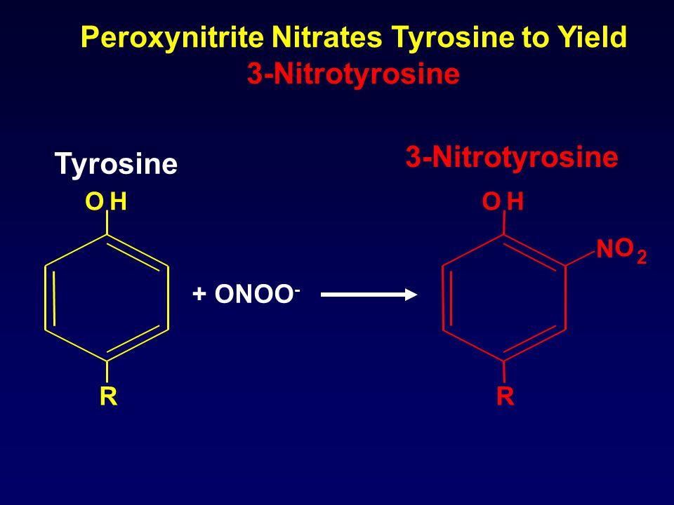 OH N O 2 R OH R + ONOO - Tyrosine 3-Nitrotyrosine Peroxynitrite Nitrates Tyrosine to Yield 3-Nitrotyrosine