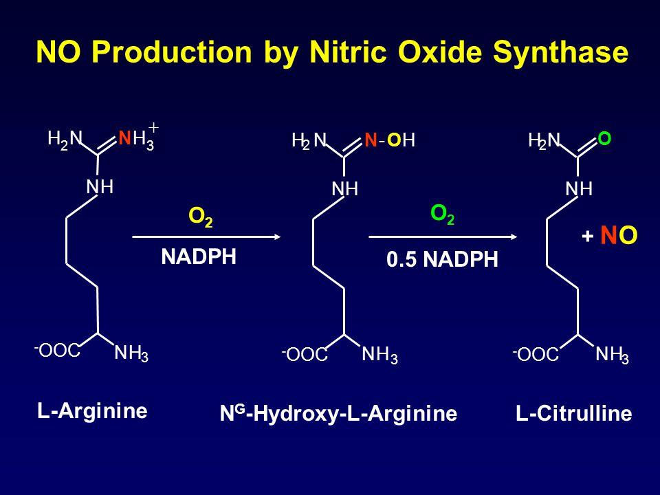 NH NH 3 H 2 N + NH 3 NH N-OHH 2 N NH 3 NH O H 2 N NH 3 - OOC + NO NO Production by Nitric Oxide Synthase O2O2 NADPH O2O2 0.5 NADPH L-Arginine N G -Hydroxy-L-ArginineL-Citrulline