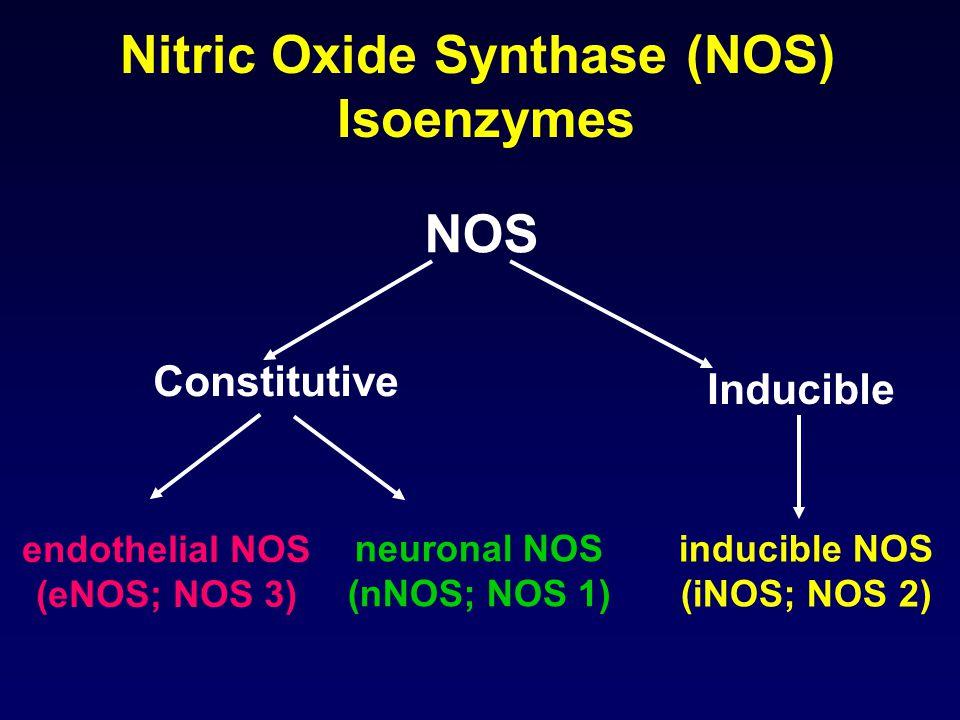 Nitric Oxide Synthase (NOS) Isoenzymes NOS Constitutive Inducible inducible NOS (iNOS; NOS 2) neuronal NOS (nNOS; NOS 1) endothelial NOS (eNOS; NOS 3)