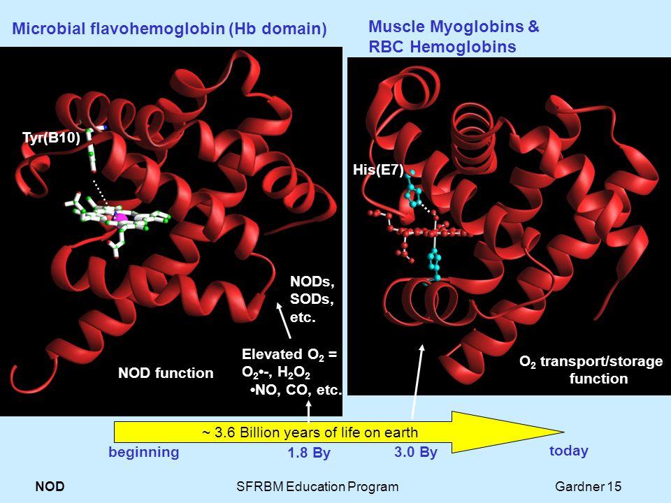 NOD SFRBM Education Program Gardner 15 Tyr(B10) Microbial flavohemoglobin (Hb domain) ~ 3.6 Billion years of life on earth His(E7) Muscle Myoglobins & RBC Hemoglobins His(E7) Elevated O 2 = O 2 -, H 2 O 2 NO, CO, etc.