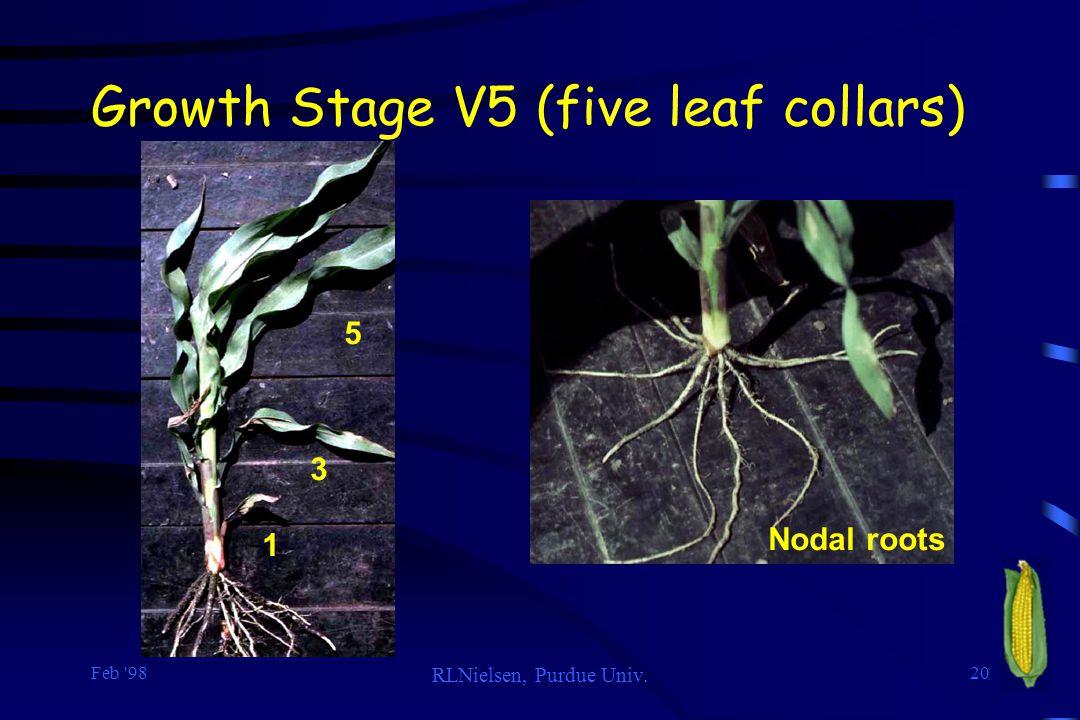 Feb 98 RLNielsen, Purdue Univ. 20 Growth Stage V5 (five leaf collars) Nodal roots 1 3 5