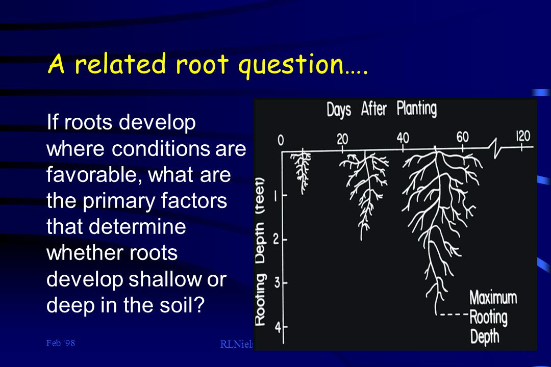Feb '98 RLNielsen, Purdue Univ. 24 A related root question…. If roots develop where conditions are favorable, what are the primary factors that determ