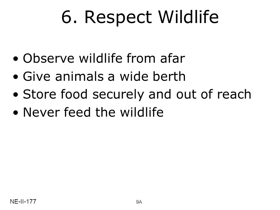 6. Respect Wildlife Observe wildlife from afar Give animals a wide berth Store food securely and out of reach Never feed the wildlife NE-II-177 9A