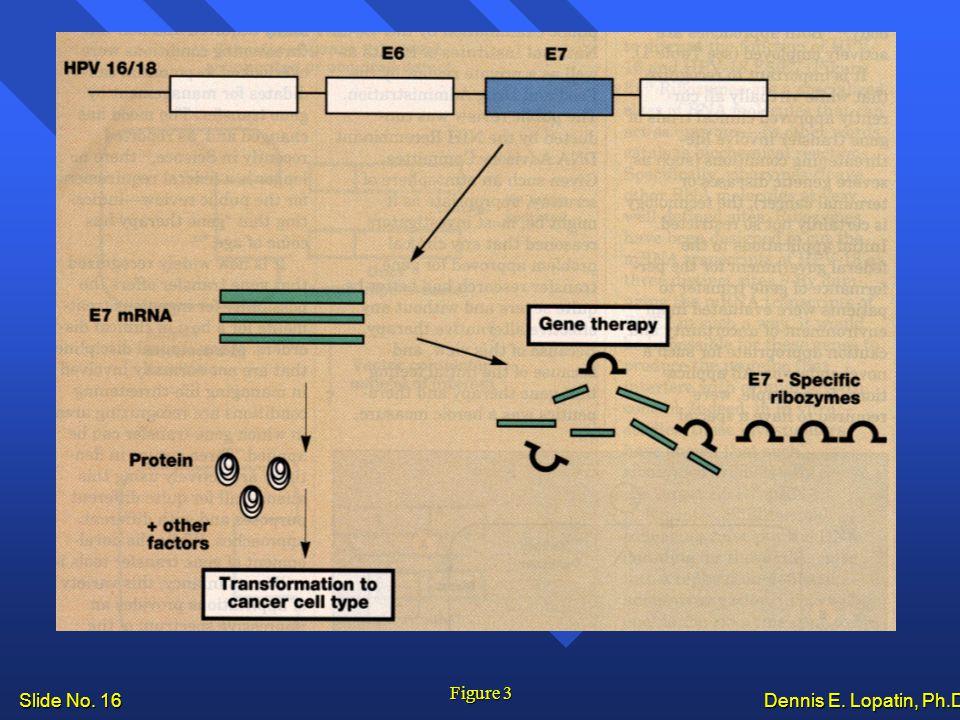 Slide No. 16 Dennis E. Lopatin, Ph.D.. Figure 3