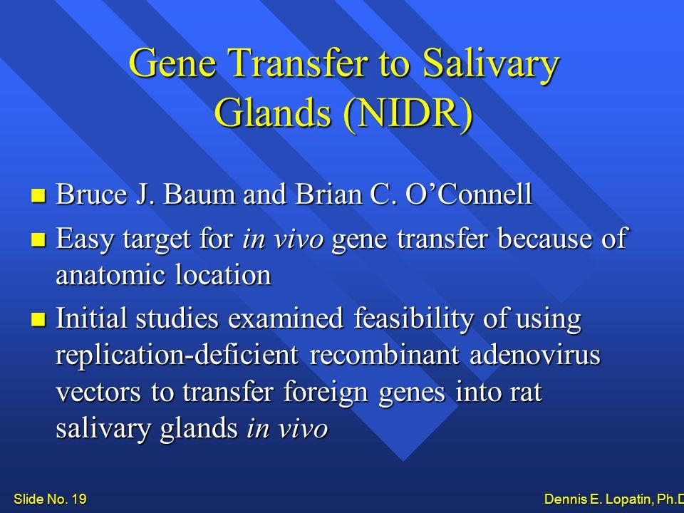 Slide No. 19 Dennis E. Lopatin, Ph.D.. Gene Transfer to Salivary Glands (NIDR) Bruce J.