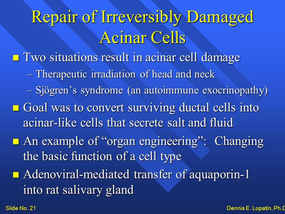 Slide No. 21 Dennis E. Lopatin, Ph.D..