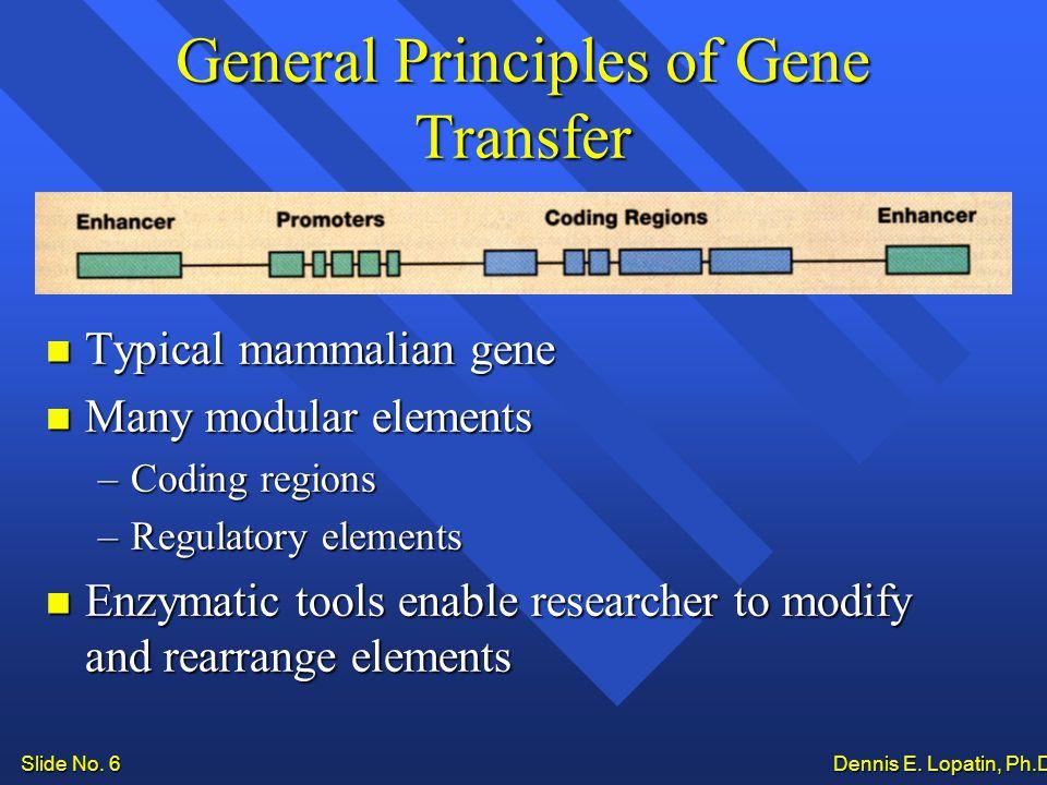 Slide No. 6 Dennis E. Lopatin, Ph.D..